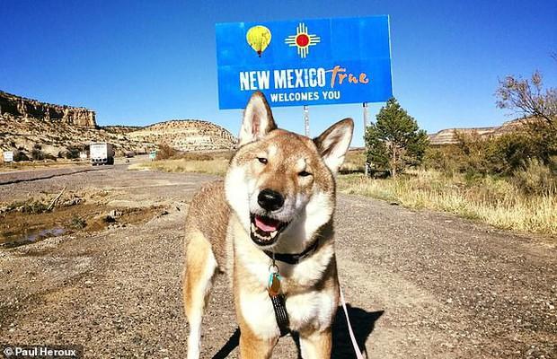 Chó cưng bị ung thư, Thị trưởng Massachusetts hủy hết lịch làm việc để đưa chú đi du lịch quanh nước Mỹ lần cuối cùng - Ảnh 2.