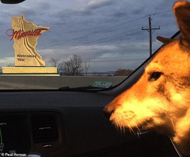 Chó cưng bị ung thư, Thị trưởng Massachusetts hủy hết lịch làm việc để đưa chú đi du lịch quanh nước Mỹ lần cuối cùng - Ảnh 4.