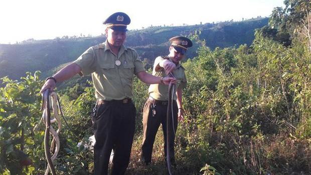 Nhóm đối tượng bỏ lại 150 cá thể rắn bên đường rồi tháo chạy - Ảnh 1.