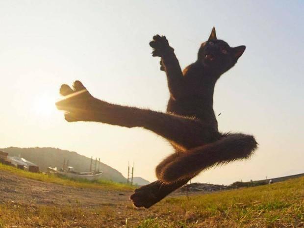 Chùm ảnh: Khi lũ boss mèo chăm chỉ luyện tập võ công, chờ đến ngày đi chiếm lấy thế giới - Ảnh 2.