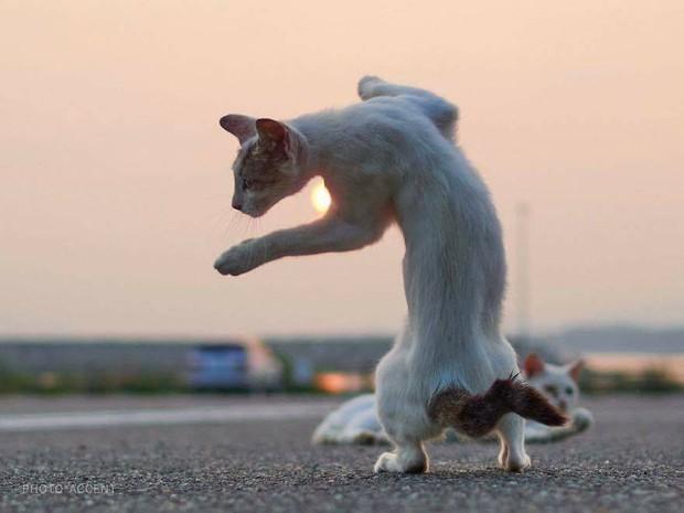 Chùm ảnh: Khi lũ boss mèo chăm chỉ luyện tập võ công, chờ đến ngày đi chiếm lấy thế giới - Ảnh 8.