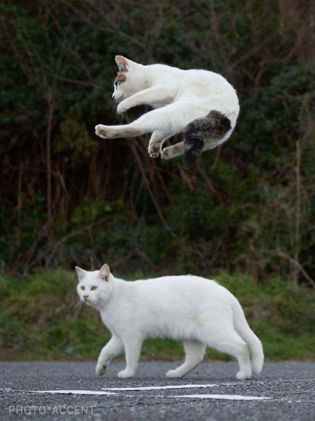 Chùm ảnh: Khi lũ boss mèo chăm chỉ luyện tập võ công, chờ đến ngày đi chiếm lấy thế giới - Ảnh 16.