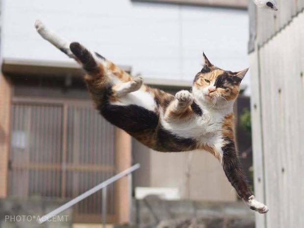Chùm ảnh: Khi lũ boss mèo chăm chỉ luyện tập võ công, chờ đến ngày đi chiếm lấy thế giới - Ảnh 18.