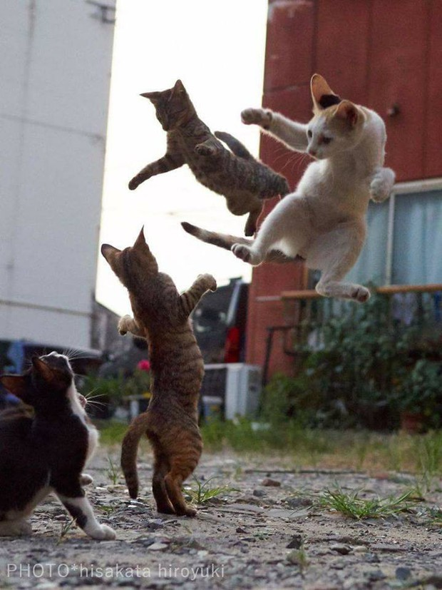 Chùm ảnh: Khi lũ boss mèo chăm chỉ luyện tập võ công, chờ đến ngày đi chiếm lấy thế giới - Ảnh 20.