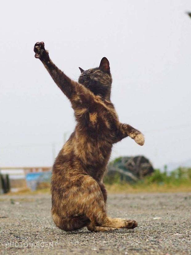 Chùm ảnh: Khi lũ boss mèo chăm chỉ luyện tập võ công, chờ đến ngày đi chiếm lấy thế giới - Ảnh 22.