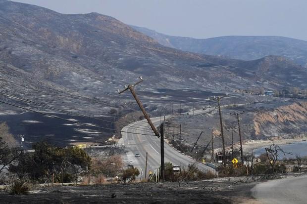 Cháy rừng ở California: Những con vật bị mắc kẹt trong biển lửa - Ảnh 11.