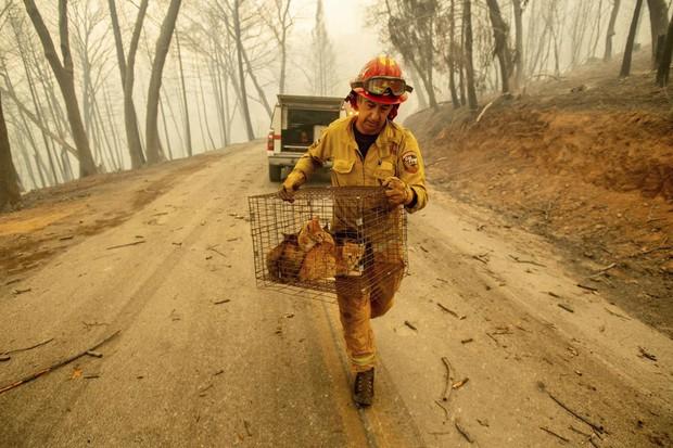 Cháy rừng ở California: Những con vật bị mắc kẹt trong biển lửa- Ảnh 1.
