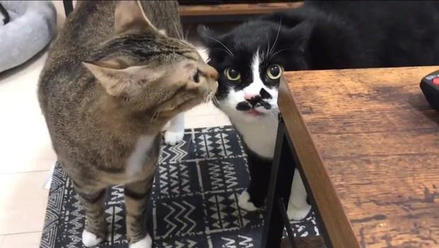 Ngôi sao mới nổi của Internet Nhật Bản là một con mèo biết đọc rap - Ảnh 2.