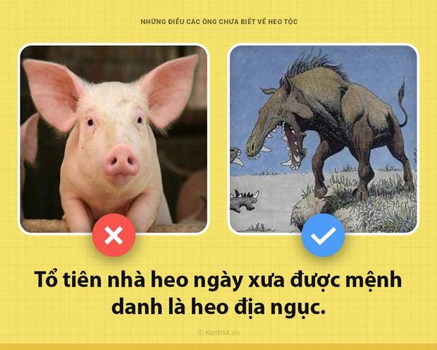 Xin chào! Tôi là một con lợn và các ông chưa biết tôi có thể hay ho đến thế nào đâu - Ảnh 1.