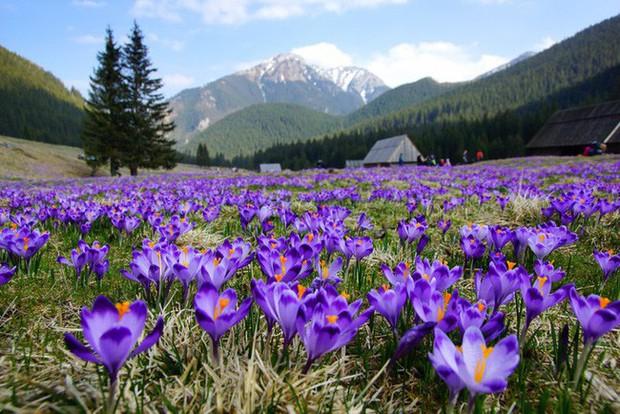Bí mật thú vị của saffron - gia vị đắt nhất thế giới gần 1 tỷ/kg từng được Nữ hoàng Ai Cập dùng dưỡng nhan  - Ảnh 2.