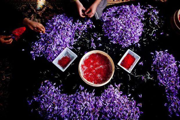 Bí mật thú vị của saffron - gia vị đắt nhất thế giới gần 1 tỷ/kg từng được Nữ hoàng Ai Cập dùng dưỡng nhan  - Ảnh 3.