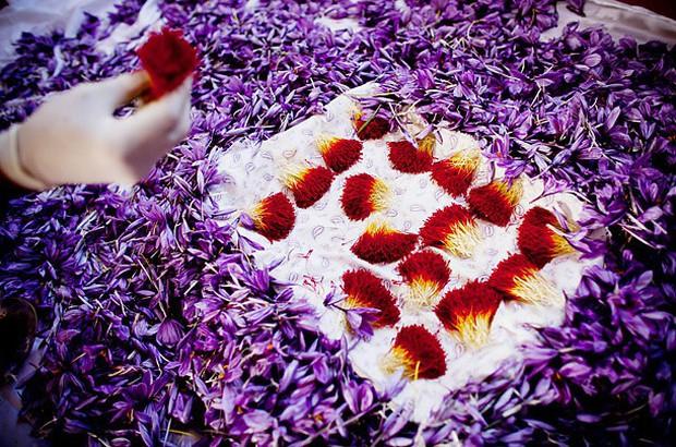 Bí mật thú vị của saffron - gia vị đắt nhất thế giới gần 1 tỷ/kg từng được Nữ hoàng Ai Cập dùng dưỡng nhan  - Ảnh 4.