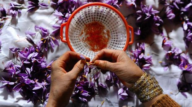 Bí mật thú vị của saffron - gia vị đắt nhất thế giới gần 1 tỷ/kg từng được Nữ hoàng Ai Cập dùng dưỡng nhan  - Ảnh 6.