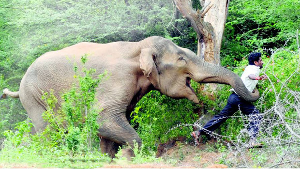 Những vụ trả thù kinh hoàng và thảm khốc nhất mà động vật hoang dã dành cho con người - Ảnh 3.