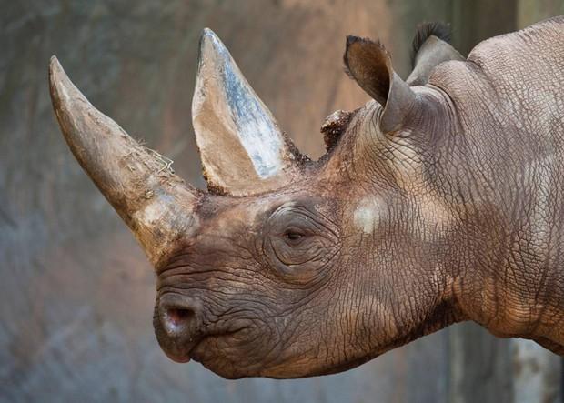 Những vụ trả thù kinh hoàng và thảm khốc nhất mà động vật hoang dã dành cho con người - Ảnh 5.