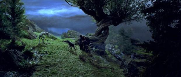 """Soi mỏi mắt không hết """"trứng phục sinh"""" trong thế giới phù thuỷ Fantastic Beasts 2 - Ảnh 16."""