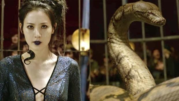 """Soi mỏi mắt không hết """"trứng phục sinh"""" trong thế giới phù thuỷ Fantastic Beasts 2 - Ảnh 5."""