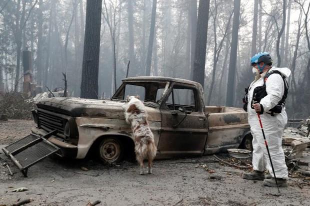 Ảnh: Chó nghiệp vụ Mỹ lùng sục tìm kiếm tử thi vụ cháy rừng California - Ảnh 4.