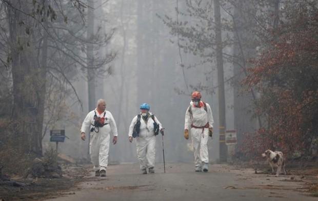 Ảnh: Chó nghiệp vụ Mỹ lùng sục tìm kiếm tử thi vụ cháy rừng California - Ảnh 5.