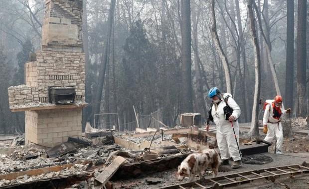 Ảnh: Chó nghiệp vụ Mỹ lùng sục tìm kiếm tử thi vụ cháy rừng California - Ảnh 6.