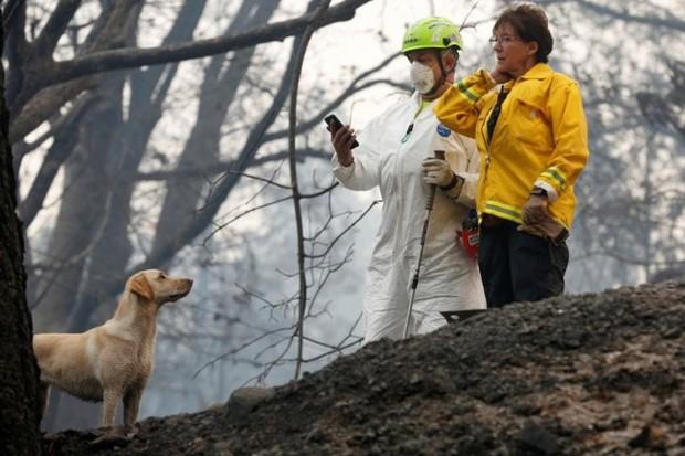 Ảnh: Chó nghiệp vụ Mỹ lùng sục tìm kiếm tử thi vụ cháy rừng California - Ảnh 8.