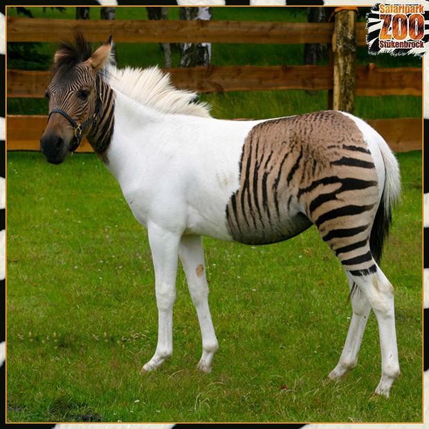 12 hoàng tử lai trong thế giới động vật với ngoại hình ngầu lòi và cá tính - Ảnh 1.