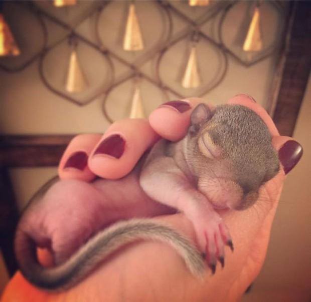 Hành trình lớn khôn của Thumbelina - chú sóc con được nhặt về nuôi từ lúc bé bằng hạt óc chó, giờ đã thành ngôi sao Instagram - Ảnh 10.