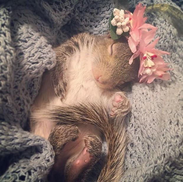 Hành trình lớn khôn của Thumbelina - chú sóc con được nhặt về nuôi từ lúc bé bằng hạt óc chó, giờ đã thành ngôi sao Instagram - Ảnh 16.