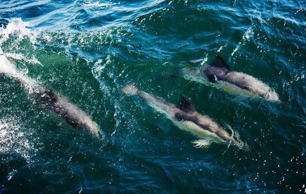 Dù có tha không đánh bắt, con người vẫn đang khiến loài cá heo trở nên thật khổ sở - Ảnh 1.