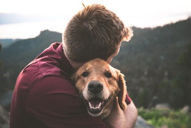 Các boss chó nhìn thấy điều gì khi quan sát con người, bạn có biết không? - Ảnh 1.