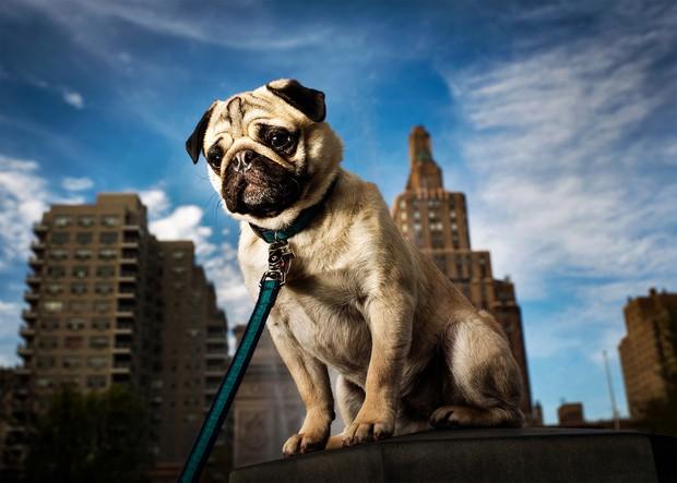 Các boss chó nhìn thấy điều gì khi quan sát con người, bạn có biết không? - Ảnh 3.