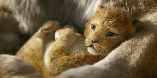Tại sao The Lion King chẳng có lấy một mống người nhưng vẫn được gọi là phim live-action? - Ảnh 5.