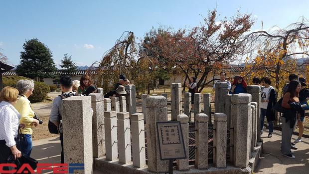 Himeji - Lâu đài hạc trắng không thể bỏ qua khi du lịch đến Nhật Bản - Ảnh 8.