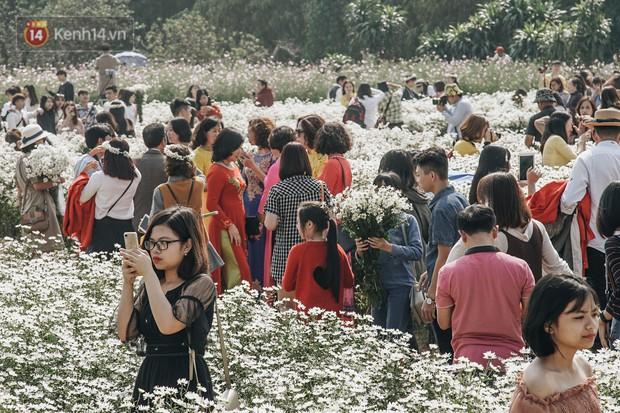 Vườn cúc họa mi ở Hà Nội tiếp tục thất thủ: Đường vào tắc nghẽn, chụp một bức ảnh phải né bao nhiêu người - Ảnh 6.