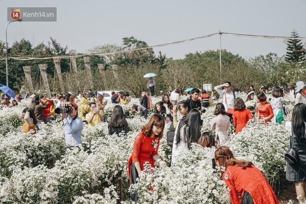 Vườn cúc họa mi ở Hà Nội tiếp tục thất thủ: Đường vào tắc nghẽn, chụp một bức ảnh phải né bao nhiêu người - Ảnh 7.