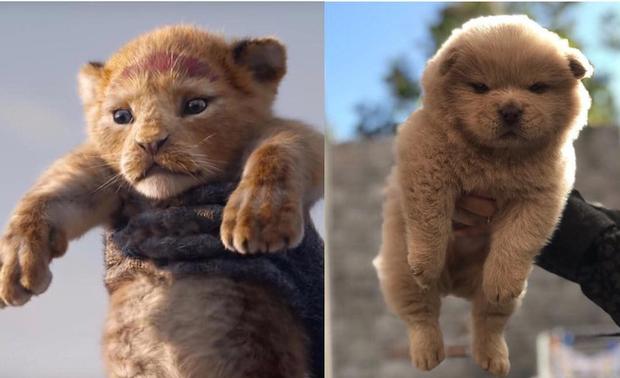 """Chết cười với trào lưu """"thử vai"""" cho các boss khi trailer The Lion King gây sốt - Ảnh 12."""