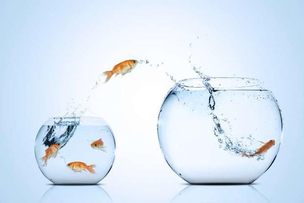 """Những sự thật khó ai tin nổi về loài cá vàng: được """"cưng"""" hết mực ở Nhà Trắng, biết làm trò như cún, và... - Ảnh 7."""