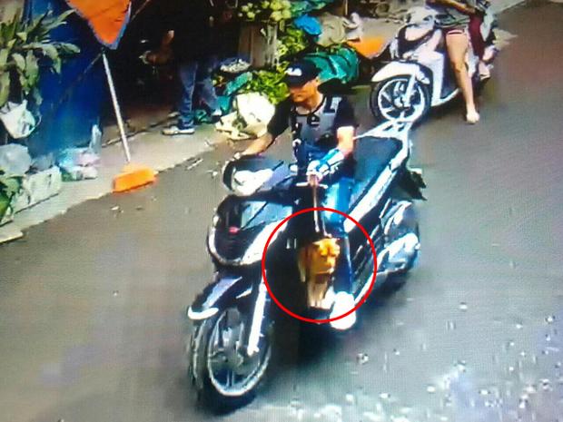 Hà Nội: Thanh niên ăn mặc sành điệu đi xe SH bế trộm chó nhà hàng xóm - Ảnh 1.