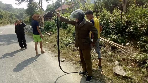Gặp rắn độc dài 2m bò ngang quốc lộ, người đàn ông vứt xe máy xuống bắt bằng tay - Ảnh 3.