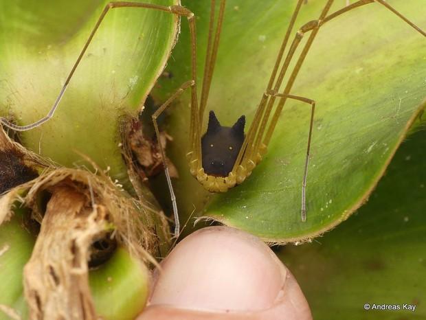Con nhện mọc sừng nhìn giống chó này là CÓ THẬT, và sự thật về nó cho thấy tạo hóa kỳ cục đến mức nào - Ảnh 1.