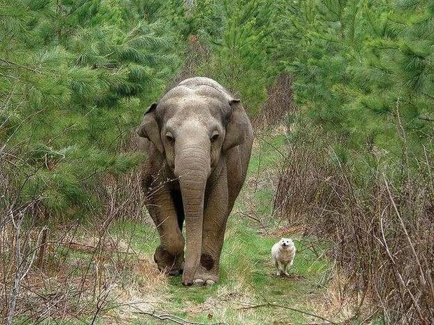 Khi động vật cũng biết nuôi thú cưng - những câu chuyện chứng minh thế giới tự nhiên cũng có thể dễ thương đến khó tin - Ảnh 9.