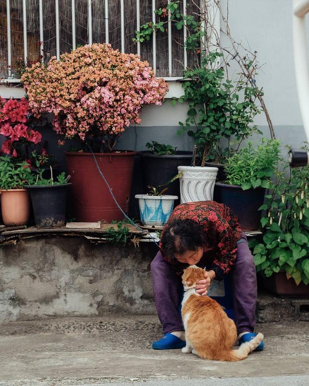 Bộ ảnh đầy xúc cảm của cụ bà Hàn Quốc: Tuổi già chẳng cần gì cả, chỉ cần một chú mèo cùng bầu bạn mà thôi - Ảnh 11.