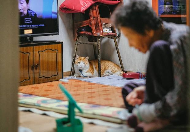 Bộ ảnh đầy xúc cảm của cụ bà Hàn Quốc: Tuổi già chẳng cần gì cả, chỉ cần một chú mèo cùng bầu bạn mà thôi - Ảnh 10.
