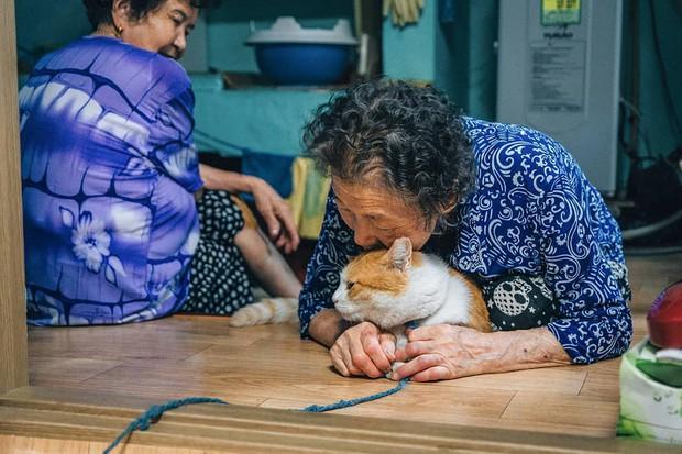 Bộ ảnh đầy xúc cảm của cụ bà Hàn Quốc: Tuổi già chẳng cần gì cả, chỉ cần một chú mèo cùng bầu bạn mà thôi - Ảnh 9.