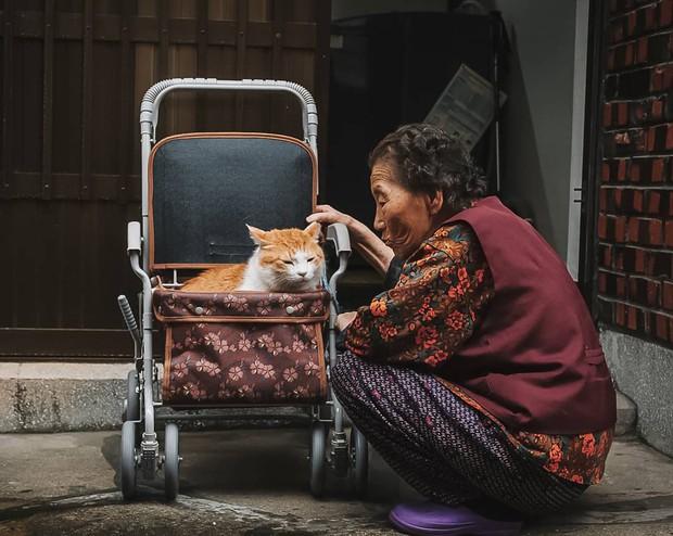 Bộ ảnh đầy xúc cảm của cụ bà Hàn Quốc: Tuổi già chẳng cần gì cả, chỉ cần một chú mèo cùng bầu bạn mà thôi - Ảnh 2.