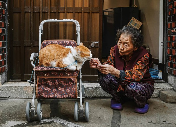 Bộ ảnh đầy xúc cảm của cụ bà Hàn Quốc: Tuổi già chẳng cần gì cả, chỉ cần một chú mèo cùng bầu bạn mà thôi - Ảnh 1.
