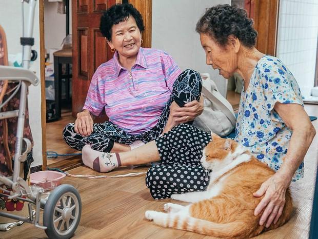 Bộ ảnh đầy xúc cảm của cụ bà Hàn Quốc: Tuổi già chẳng cần gì cả, chỉ cần một chú mèo cùng bầu bạn mà thôi - Ảnh 6.
