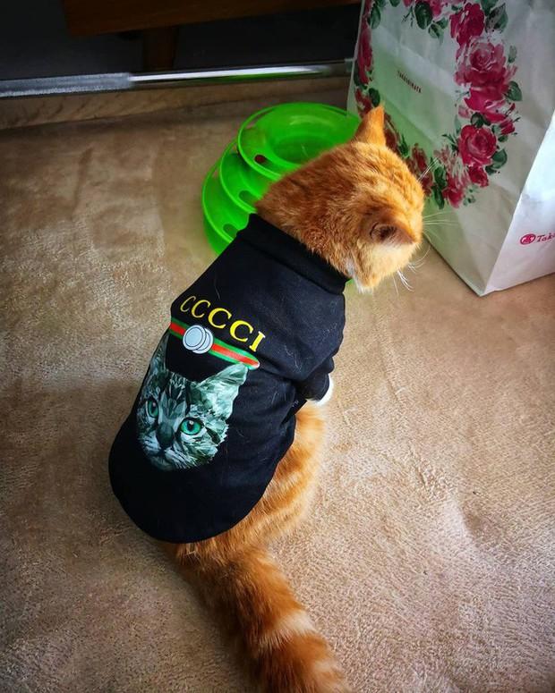 Mẹ lấy áo Gucci 7 triệu của con lót ổ mèo xong đền bằng áo 100k  Ảnh 3.
