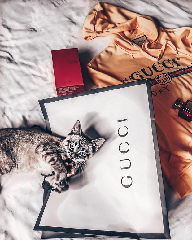 Mẹ lấy áo Gucci 7 triệu của con lót ổ mèo xong đền bằng áo 100k - Ảnh 4.