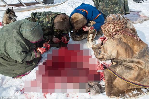 Những khoảnh khắc đời thường của Nenets: Bộ lạc du mục chuyên ăn thịt sống, uống máu tuần lộc - Ảnh 3.